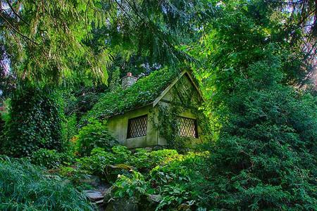 maison forêt